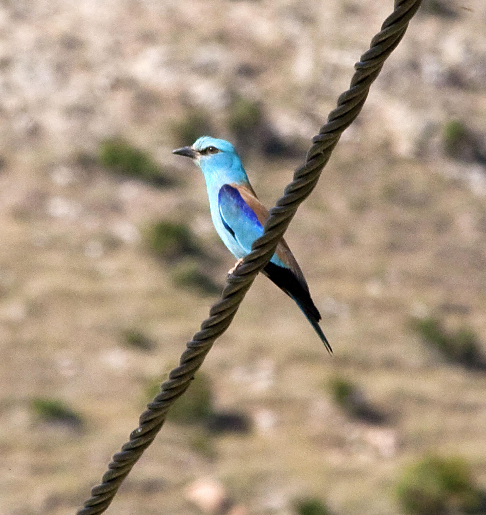 African Birds - 1