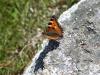 Aigues Tortes National Park 8