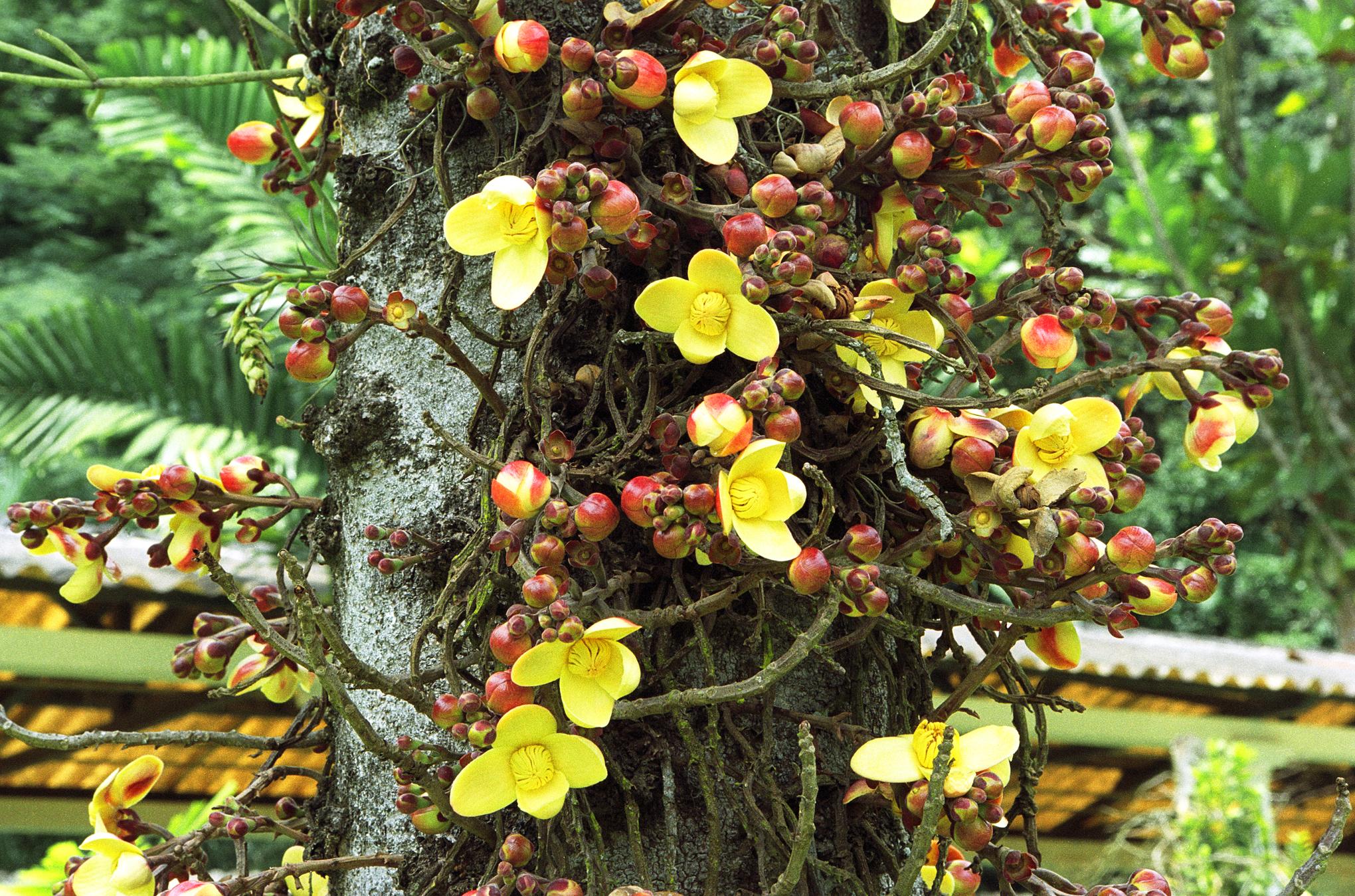 Brazil: Rio de Janeiro Botanical Gardens | Jearld Moldenhauer