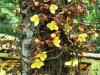 Rio Botanical - 5
