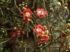 Rio Botanical - 6