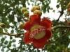 Rio Botanical - 7