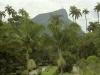 Rio Botanical - 1