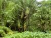 Rio Botanical - 2