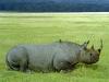 Nakuru National Park, Kenya - 1