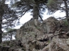 cedars-at-the-peak-of-tazzeka