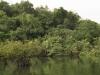 Nature in Brazil - The Amazon - 2