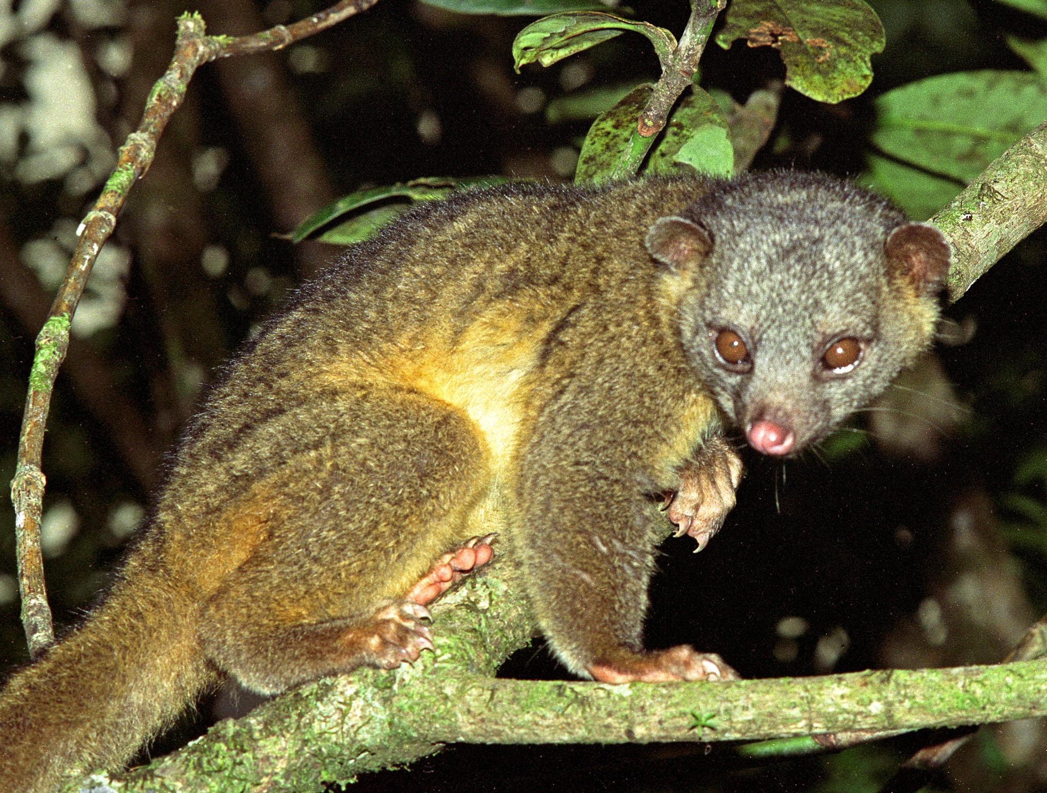 Costa Rica Fauna - 1