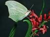 Costa Rica Fauna - 8