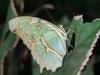 Costa Rica Fauna - 7