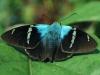 Costa Rica Fauna - 6