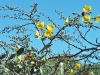 Costa Rica Flora - 1