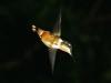 Costa Rica Fauna - 4