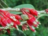 Costa Rica Flora - 3