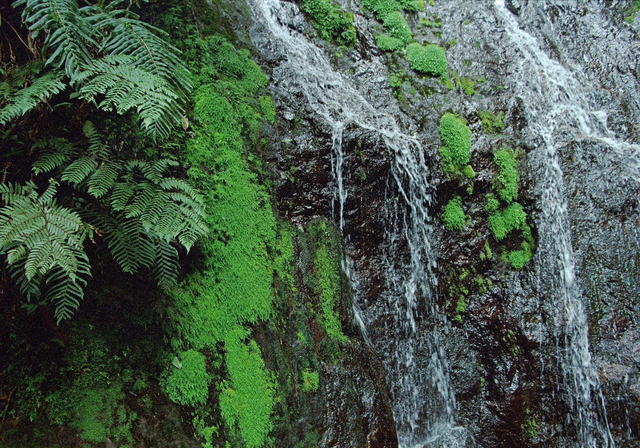 Honduras Landscape - 1