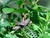 Honduras Fauna - 3