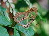 Butterfly - 1