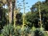 Orto Botanico Palermo - 8