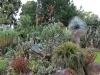 Orto Botanico - 1