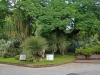 Orto Botanico - 3