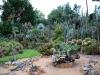 Orto Botanico - 5