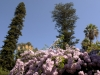 Plants in the Cities & Countryside of Sicily: Palermo 1