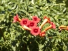 Plants in the Cities & Countryside of Sicily: Taormina - 5