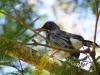 BirdPR_3671
