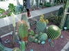 Real Jardin Botanico de Madrid - 1 Succulents 1
