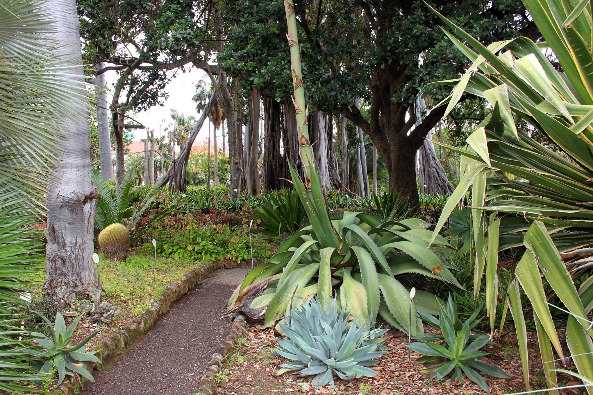 Spain puerto de la cruz jardin botanico jearld moldenhauer - Botanical garden puerto de la cruz ...
