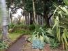 Puerto de la Cruz Botanical Garden - 5