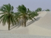 Date Palms and Dunes