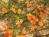 orange-creeping-plant