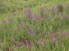 beni-snassen-flowers-3-copy
