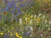 beni-snassen-flowers-4-copy