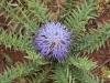 beni-snassen-flowers-6-copy