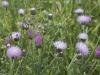 beni-snassen-flowers-8-copy