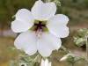 beni-snassen-flowers-9-copy