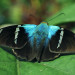 Butterfly in the Rainforest of Costa Rica, Costa Rica, 1985 thumbnail